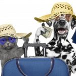 How to Train and Prepare your Dog for Air Travel