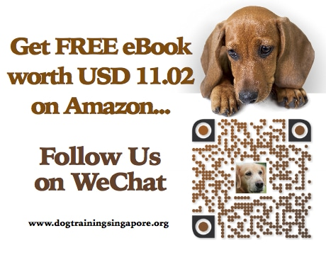 Follow Dog Training Singapore on WeChat